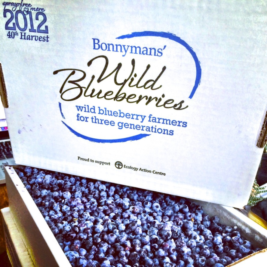 img_16the_family_also_produces_a_limited_amount_of_spray-free_no_herbicides_or_pesticides_wild_blueberries_and_markets_them_directly_to_consumers