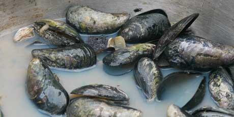 Mussels In Red Sauce Food Network