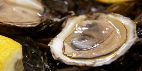 Oysters on the Half Shell Recipes   Food Network Canada