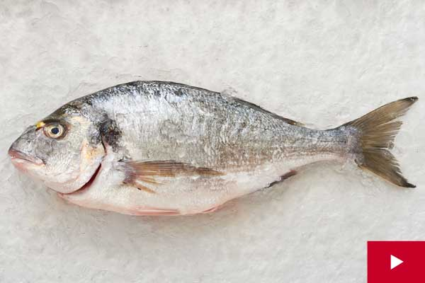 How to Buy The Freshest Whole Fish